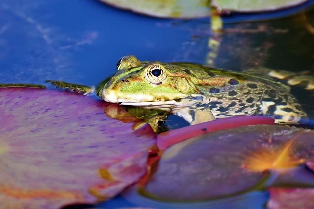 Il rischio di estinzione delle specie anfibi