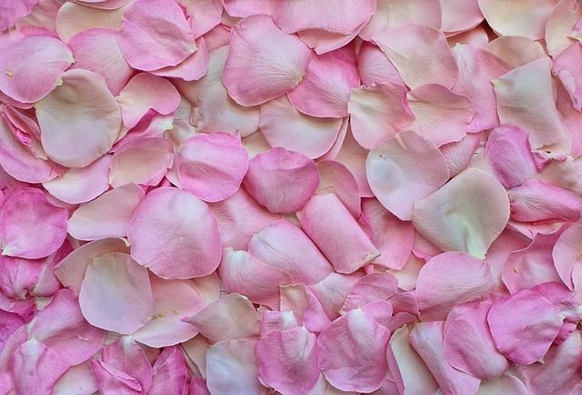 Sfumature del rosa: come si chiamano e dove si possono trovare?