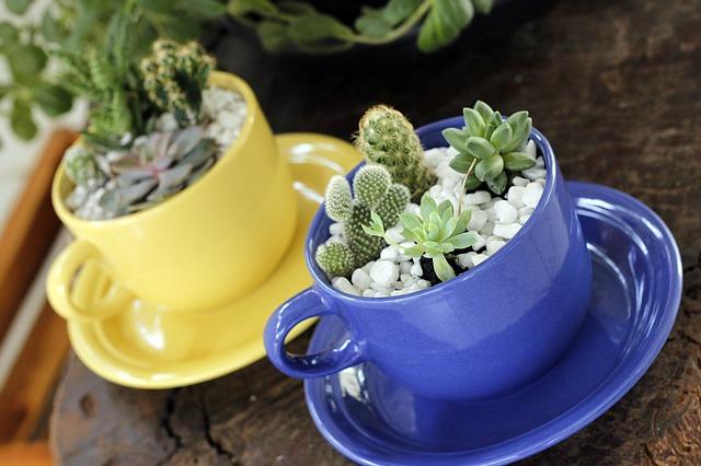 Composizioni piante grasse: idee e consigli di arredamento